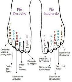 """Según el libro """"Los Pies Reflejo de la Personalidad"""" de Imre Somogyi, mediante la lectura de los dedos de los pies podemos obtener detallada información sobre el modo de vida y emociones de la persona examinada."""