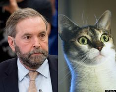 Tom Mulcair and this surprised cat Tom Mulcair and this surprised cat Join Instagram, Instagram Accounts, Jason Kenney, Toms, Look Alike, Politicians, Famous People, Funny, Cat Cat