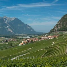 Switzerland's stunning vineyards yield wine only found here Wine Vine, Wine Tourism, Italy Spain, Going On A Trip, Usa Today, Travel Pictures, Travel Usa, Switzerland, Traveling By Yourself