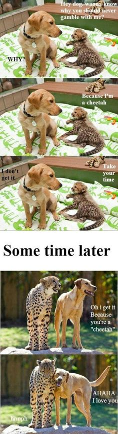 Sometimes a dog barking can be so funny. Check out these funny videos of dogs barking and puppies barking. A barking dog can make funny dog barking . Humor Animal, Funny Animal Memes, Cute Funny Animals, Funny Animal Pictures, Cute Baby Animals, Funny Cute, Funny Dogs, Animals And Pets, Cute Dogs