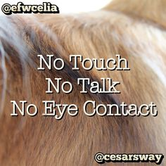 """No Touch, No Talk, No Eye Contact"" by Cesar Millan. Designed by Celia Fransisca."