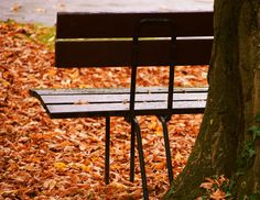 Free Image on Pixabay - Bank, Autumn, Leaves, Park, Rest Free Pictures, Free Images, Cheap Travel, Outdoor Furniture, Outdoor Decor, Vacation Trips, Autumn Leaves, Rest, Parks