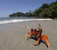 Rough Guides - Costa Rica