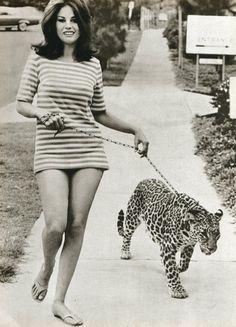 Nice Cougar.