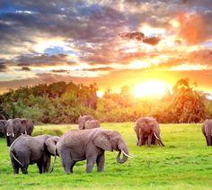 Elefantes en Sudáfrica