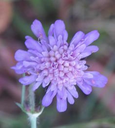 Little Mauve, flower photography, meadow, wildflower, summer