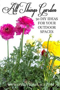 Tips, tricks and advice to transform your outdoor spaces. Great stuff!