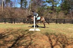 After Dark (barn name is Lacy) is a hh Appaloosa mare. She has amazing ground manners. She's a perfect first pony for anyone. Ponies For Sale, Hunter Jumper, Trail Riding, Appaloosa, After Dark, Pony, Calm, Horses, Amazing