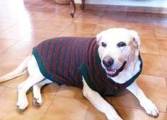 roupas para cachorro grande porte - Pesquisa Google