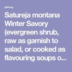 Satureja montana Winter Savory (evergreen shrub, raw as garnish to salad, or cooked as flavouring soups or stews, herbal tea)