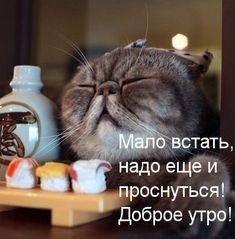 Доброе утро Картинка. Мало встать, надо еще и проснутьсяЁ Доброе утро! смайлик гиф анимация Abraham Hicks Quotes, Cute Gif, Animals And Pets, Good Morning, Positivity, Lol, Words, Funny, Smile