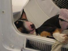 snoozin' in the dryer?