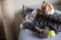 Click here to read about ways and games to play with your cat!
