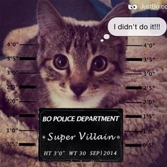 #mugshot I didnt do it! #cats