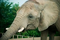Help Elephant Exploited in Texas for Cruel University Tradit... - Care2 News Network