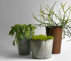 maple syrup potted plants galvanized steel   le petit Happy: eco Tip: vintage pots as planters