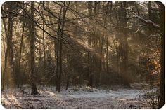 Goede foto's maken in het bos blijft een uitdaging. Met deze 10 handige tips kun je meteen aan de slag en zie je direct resultaat! | Fotografie tips bos