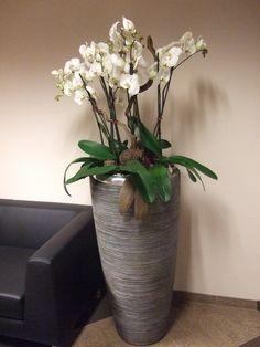 Нежность и красота: орхидеи в интерьере