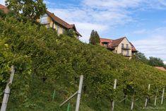 Tasting Menu, Tasting Room, Visit Austria, Types Of Wine, Wine List, Wine Making, Hotel Spa, Tuscany, Rum