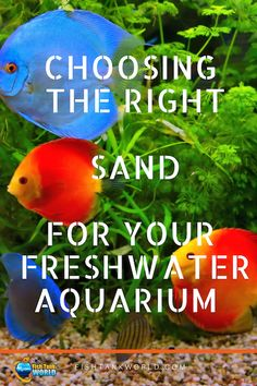 The best sand for freshwater aquarium. We cover here the advantages and drawbacks you need to pay attention to when you choose the sand Aquarium Sand, Coral Reef Aquarium, Freshwater Aquarium Plants, Marine Aquarium, Aquarium Fish Tank, Planted Aquarium, Freshwater Fish, Discus Aquarium, Aquariums
