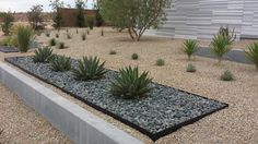 Various cacti scattered throughout the gravel yard creates a unique modern landscape. Gray stones make the agave plants stand out against the sand-colored rocks.