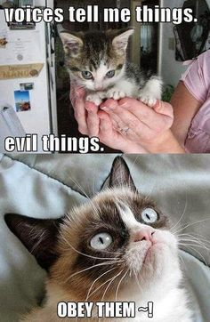 #GrumpyCat #meme For more Grumpy Cat stuff, gifts, and meme visit www.pinterest.com/erikakaisersot