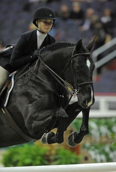 """lifeatthebarn: A """"normal"""" jumping face- What is this madness? Cute Horses, Beautiful Horses, Horse Wallpaper, Dressage Horses, English Riding, Hunter Jumper, Show Jumping, Horse Girl, Horse Pictures"""