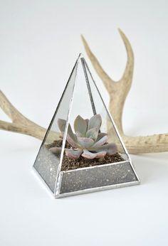 Succulent Glass Terrarium Kit - Moss Terrarium
