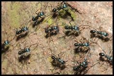 Most of the homeowners have faced many problems from ants. There are several techniques that help to kill ant permanently. Ant Species, Termite Pest Control, Ant Colony, Black Ants, Fire Ants, Pest Control Services, Homemade, Unique, Insects
