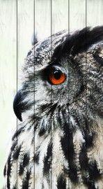 Schilderij op hout: Uil