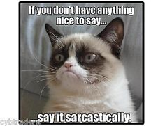 Funny Grumpy Cat Sarcastic Refrigerator / Tool Box / File Cabinet Magnet