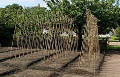 Bambusstativ til bønner