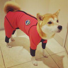 spacedog / knaprock