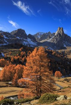 Awesome Autumn - Larch trees in Vallée de la Clarée during a clear day in autumn. The Clarée river meanders through this lovely valley, with Pointe des Cerces high above it.   During the hike me and my girlfriend made here, we were blessed with five days of nearly clear sky's, sunshine and almost 20 degrees. The nights weren't cold as well, with the temperature just getting below freezing. It is an awesome place to enjoy autumn!