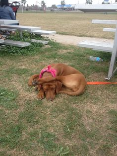 My sencond RR little NZuri MLizzy 2, Lizzy ... She is so goofy! Sleeping during a soccer game!