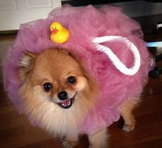 15 Clever Dog Costum