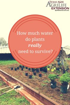 Pinterest: The Texas A&M Institute of Renewable Natural Resources is leading this study to examine 100 of the most popular Central Texas landscape plants to determine the minimum amount of water required by the plants to survive and recover after a drought.   Learn More!