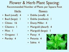 For your flowers and herbs, check out this chart of how many plants to have per square foot  Image source: littleblogintheburbs.blogspot.com/2013/04/quickie-chart-for-square-foot-plant.html . Check out our gardening blog now for more gardening tips: homeandgardenamerica.com/blog