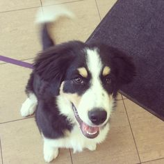 What a sweetheart Mila is! And she was just so happy to be here and meet new people. It's important that your puppy gets out and meets new people, and has new experiences, during those first few weeks. #puppyvaccinations #millwoodseastpets #edmontonvet