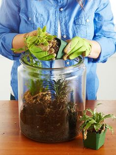planting a terrarium