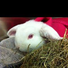 Riek de poepfabriek, een van mijn konijntjes
