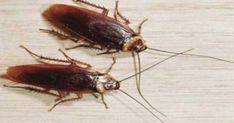 Αντίο… κατσαρίδες! Με αυτά τα δύο συστατικά που έχετε όλοι στο σπίτι σας!