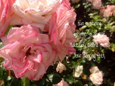Photo made in my garden the qoute are a lyrics from Bob Marley