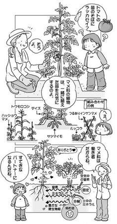 家庭菜園イラスト 書籍『マンガでわかる家庭菜園の裏ワザ』より