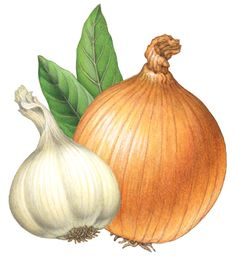Food illustration of a whole yellow onion, a head of garlic, and two laurel bay leaves.