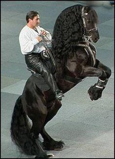 Courbette. That horse is magnificent! Freisian?