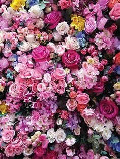Flower Iphone Wallpaper, Flower Background Wallpaper, Flower Backgrounds, Nature Wallpaper, Summer Wallpaper, Iphone Wallpapers, Summer Flowers, Pretty Flowers, Pink Flowers