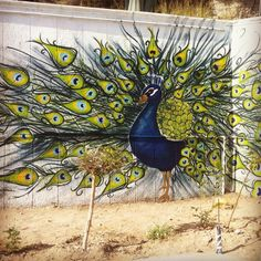 Peacock wall art! Peacock feathers. #wallart #graffiti #art #montana #spray #streetstyle
