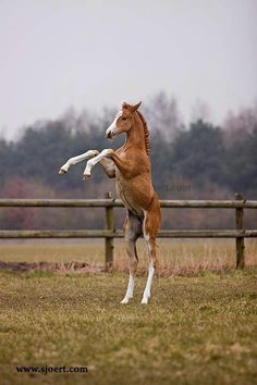 Adorable little horse rearing up with all his heart!