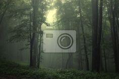 Grüner wald nach regen - Fototapeten - myloview 150,- 220 m hoch